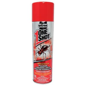 One Shot Ants / Cockroaches